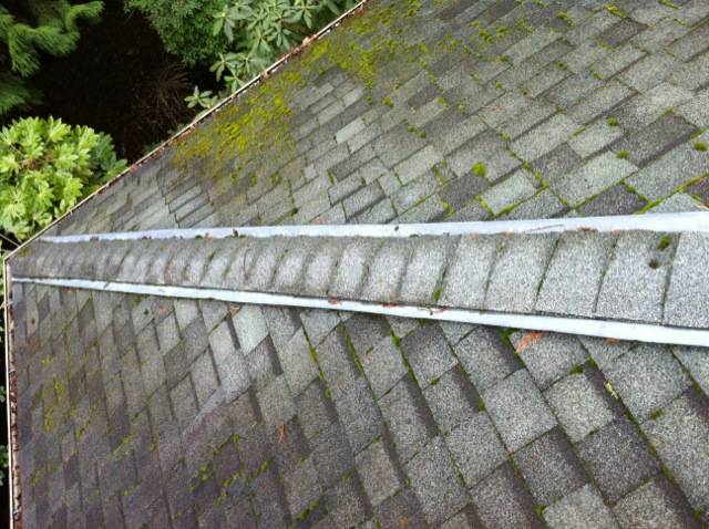 Moss Growing Right Next To Zinc Strip Photo By Portland Roof Cleaning